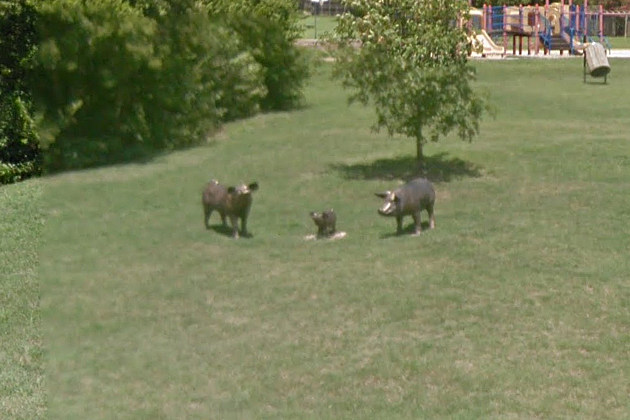 Pig Statues at Oak Creek Park in Temple - Google Maps